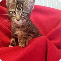 Adopt A Pet :: Phillip - Boise, ID