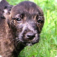 Adopt A Pet :: Moose - Glastonbury, CT