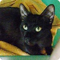Adopt A Pet :: Minnie - Franklin, NH