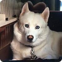 Adopt A Pet :: Casper - Clearwater, FL