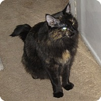 Adopt A Pet :: Cappie - San Jose, CA