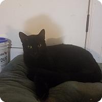 Adopt A Pet :: Cinder - Medford, NY