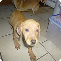 Adopt A Pet :: Crinna - Glastonbury, CT