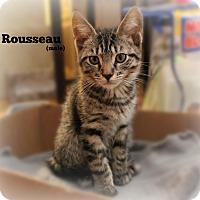 Adopt A Pet :: Rousseau - Glen Mills, PA