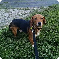 Adopt A Pet :: Harry Henderson - Waldorf, MD