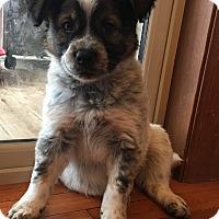 Adopt A Pet :: Johnny B - Brandon, SD