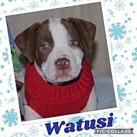 Adopt A Pet :: Watusi - Valparaiso, IN