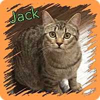 Adopt A Pet :: Jack - Arlington/Ft Worth, TX