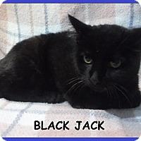 Adopt A Pet :: Black Jack - Batesville, AR