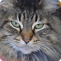Domestic Longhair Cat for adoption in Byron Center, Michigan - Daisey