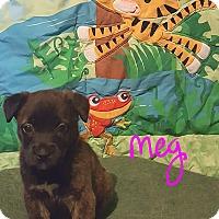 Adopt A Pet :: Meg - Burlington, VT