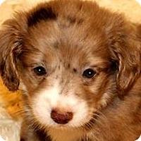 Adopt A Pet :: BONNIE(OUR