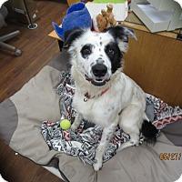 Adopt A Pet :: Ozzy - Lake Odessa, MI