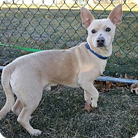 Adopt A Pet :: Dodger - New Oxford, PA