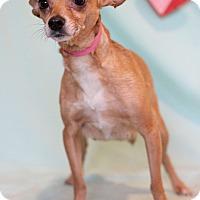 Adopt A Pet :: Zenda - Waldorf, MD