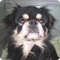 Adopt A Pet :: Gordo - Orlando, FL