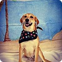 Adopt A Pet :: Holly - Princeton, KY