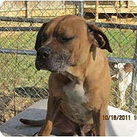 Adopt A Pet :: Wally - Afton, TN