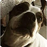 Adopt A Pet :: Nayla - Scottsdale, AZ