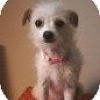 Adopt A Pet :: Iris - Justin, TX