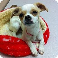 Adopt A Pet :: Isabelle - Gilbert, AZ