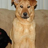 Adopt A Pet :: Chloe - Rockaway, NJ