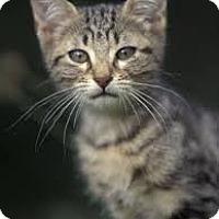 Adopt A Pet :: Desoto (& Jamie) - Arlington, VA