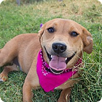 Adopt A Pet :: Iggy - Patterson, CA
