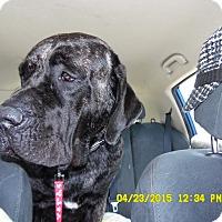 Adopt A Pet :: Aura - Missouri City, TX