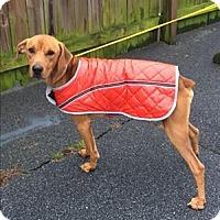 Adopt A Pet :: 15-11-3472 Mccarthy - Dallas, GA