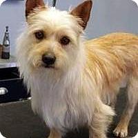 Adopt A Pet :: Leo - Harrisville, RI