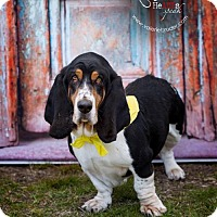 Adopt A Pet :: COPPER II - Pennsville, NJ