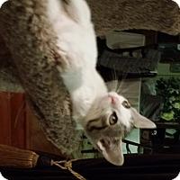 Adopt A Pet :: Vesper - Orange, CA