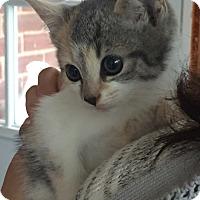 Adopt A Pet :: Juniper - River Edge, NJ