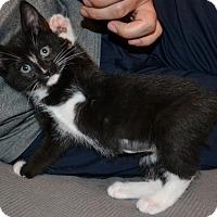 Adopt A Pet :: Janis - Marietta, GA