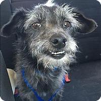 Adopt A Pet :: Happy - Encino, CA