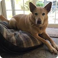 Adopt A Pet :: Charlie - McKenna, WA