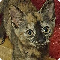 Adopt A Pet :: Autumn - Monroe, NC
