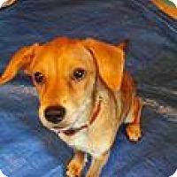 Adopt A Pet :: Ditsy - Racine, WI
