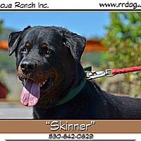 Adopt A Pet :: Skinner - Yreka, CA