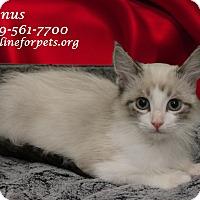 Adopt A Pet :: A Baby: VENUS - Monrovia, CA