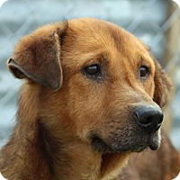 Adopt A Pet :: Rue - Asheville, NC