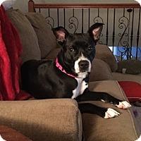Adopt A Pet :: Rosie - Pataskala, OH