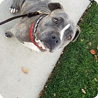 Adopt A Pet :: Darla - Mission Viejo, CA
