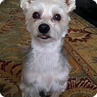 Adopt A Pet :: Buttons - Rochester, MN