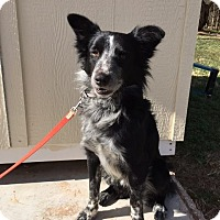 Adopt A Pet :: Murdock - Snyder, TX
