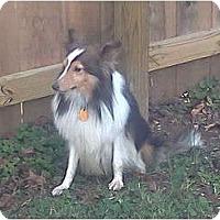 Adopt A Pet :: Rocco - Lexington, TN
