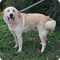 Adopt A Pet :: *Redford - PENDING - Westport, CT