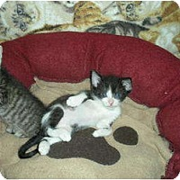 Adopt A Pet :: Tess - Huffman, TX