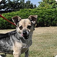 Adopt A Pet :: Kimi - Tumwater, WA